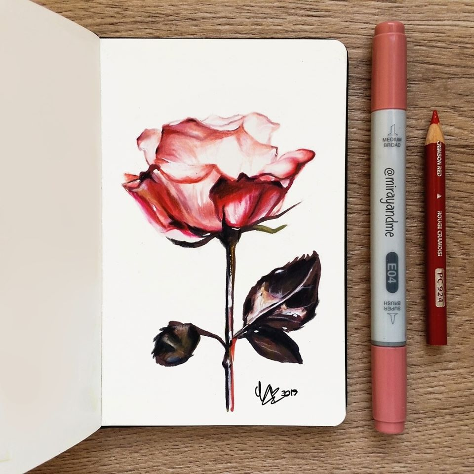 color pencil drawing rose miray
