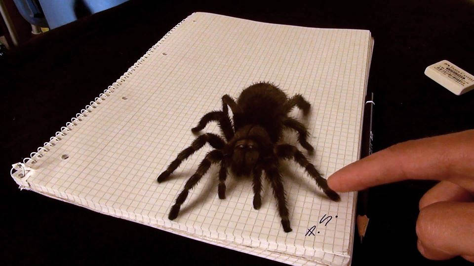 3d paintings spider stefan pabst