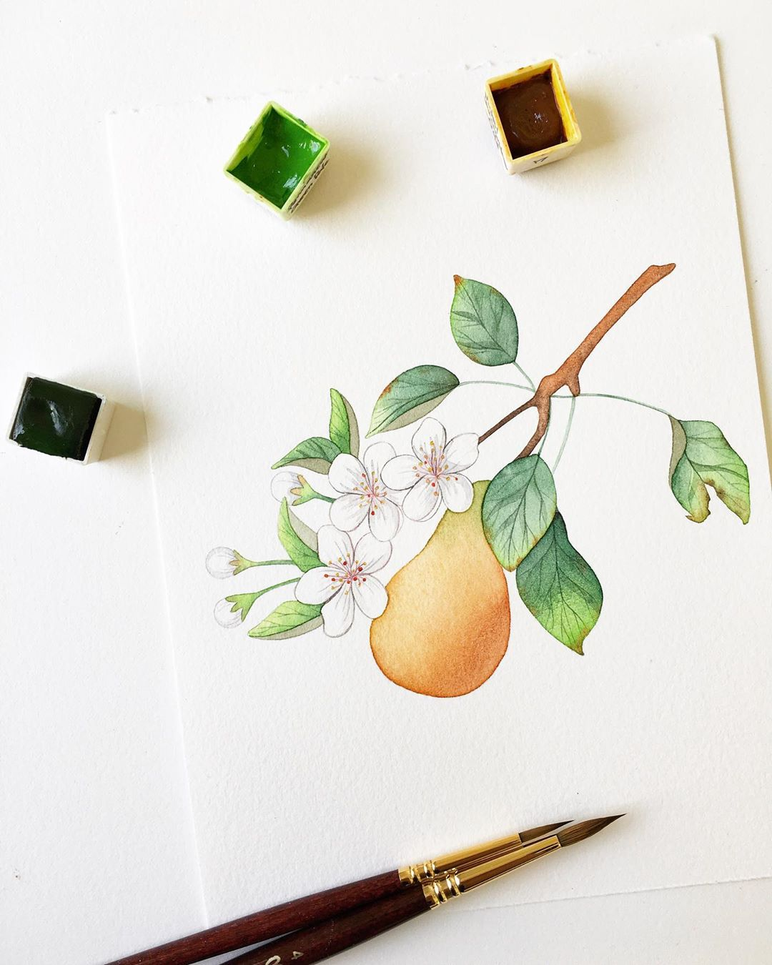 watercolor painting fruit flower mia