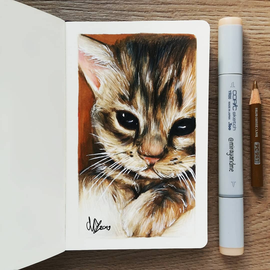 color pencil drawing cat miray