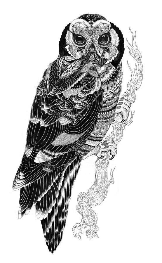 owl creative drawings by iain macarthur