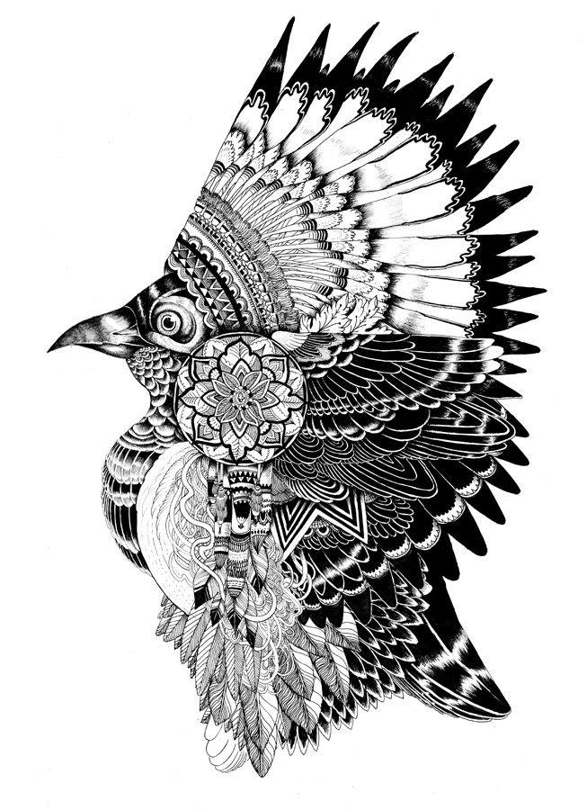 bird creative drawings by iain macarthur