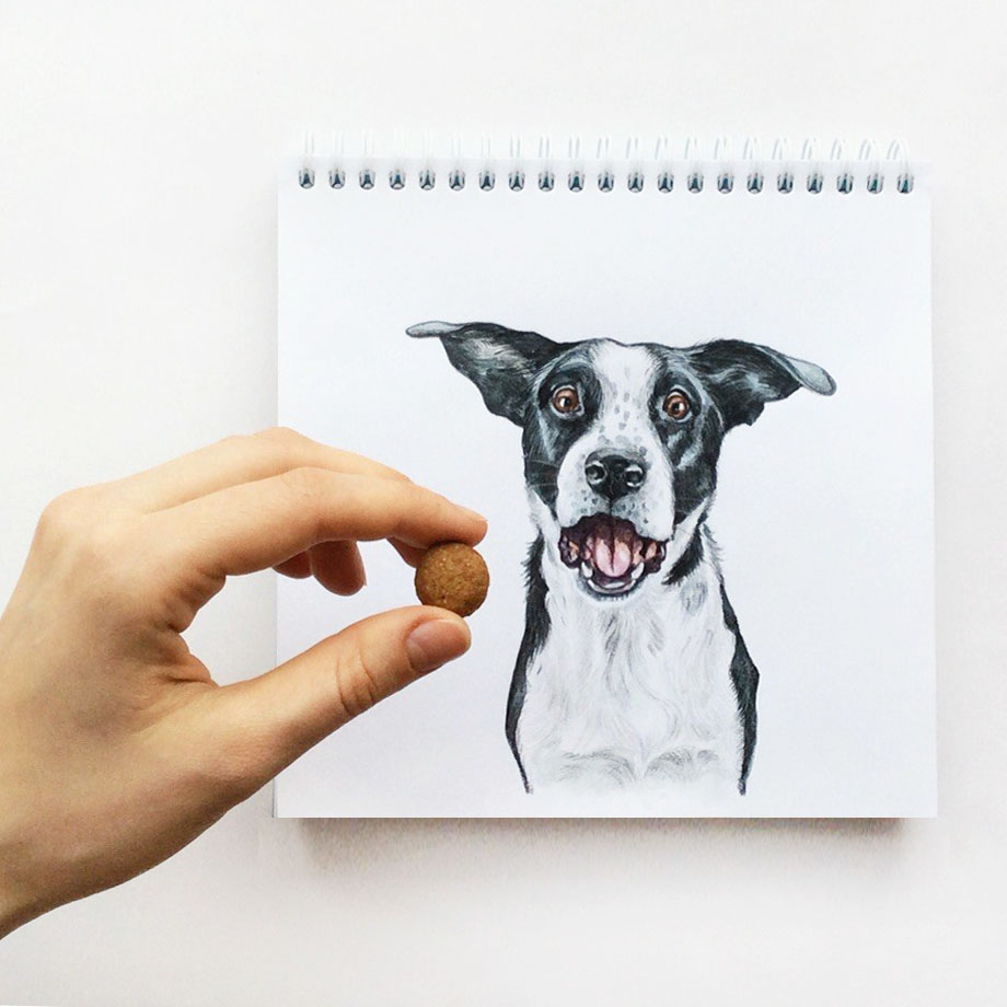 funny dog color pencil drawing idea by valerie susik