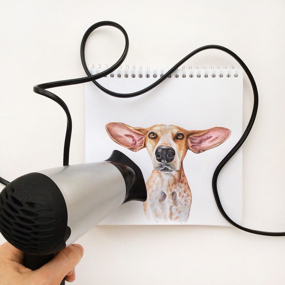 4 funny dog color pencil drawing idea by valerie susik