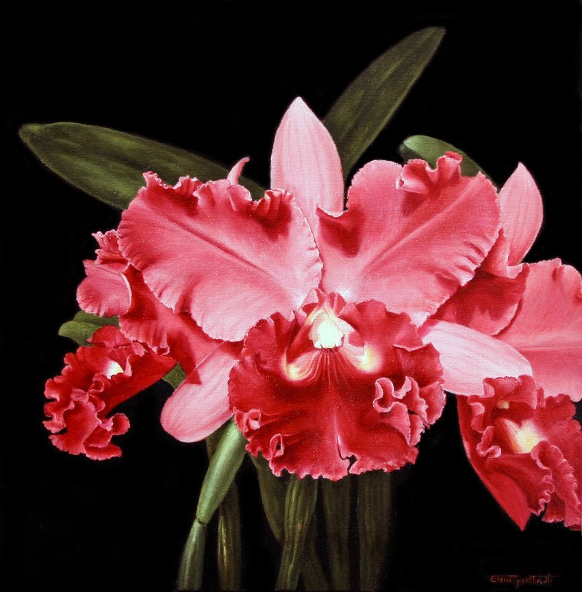 7 oil painting flower elena gualtierotti