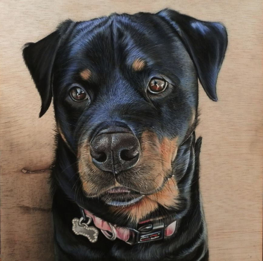 2 hyper realistic color pencil drawing dog by ivan hoo