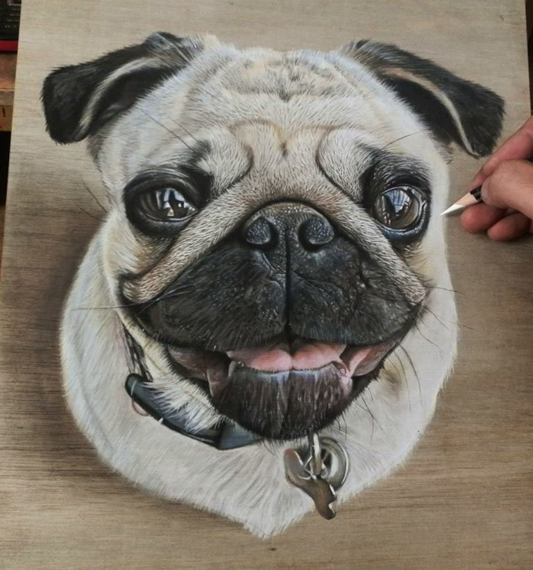 realistic color pencil drawing pug dog by ivan hoo