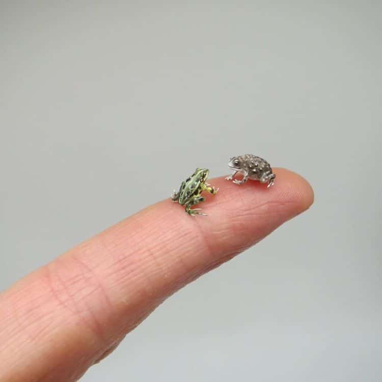 miniature polymer clay sculpture frog chat by fanni sandor