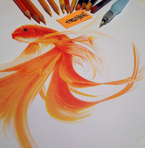 color fish pencil drawing