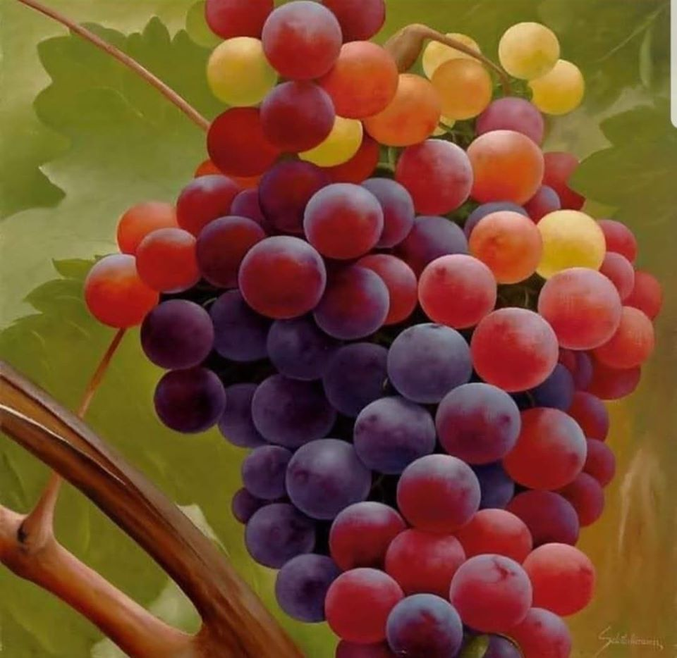 still life painting grapes