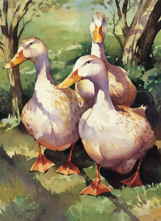 watercolor painting duck by trevor waugh