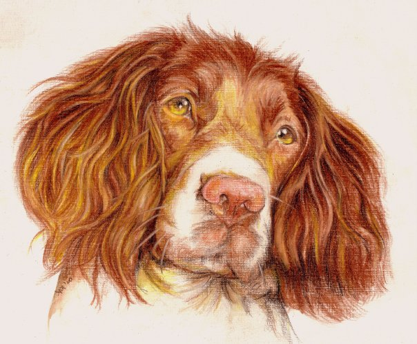 dog color pencil drawing by andrea