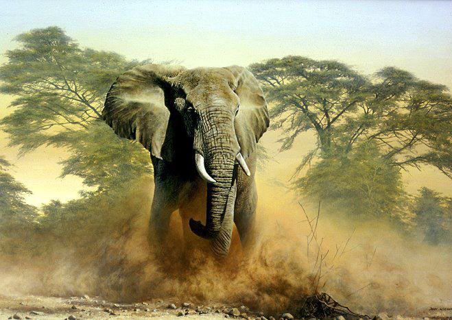 elephant color pencil drawing by john