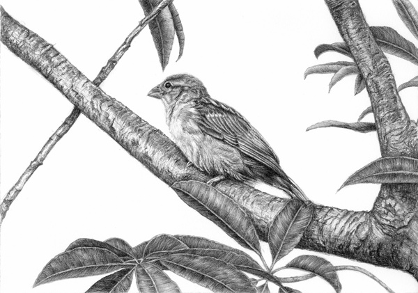 10 little bird drawings