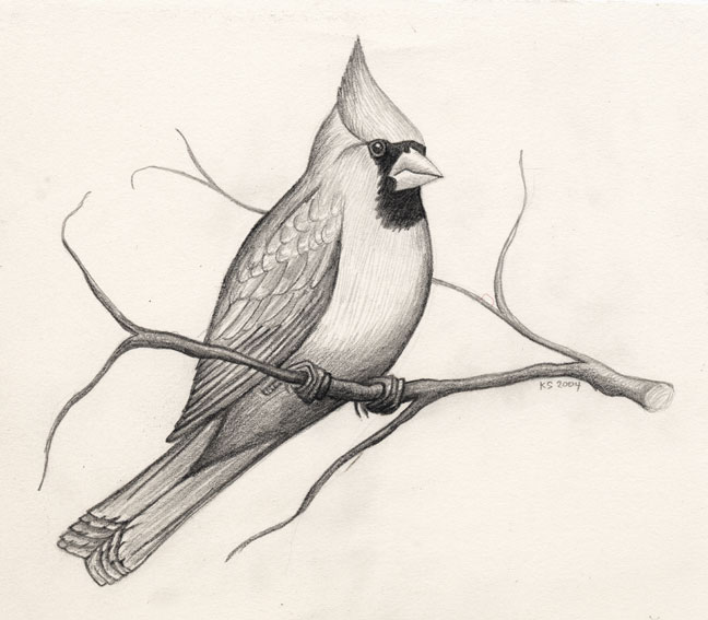 11 bird drawings
