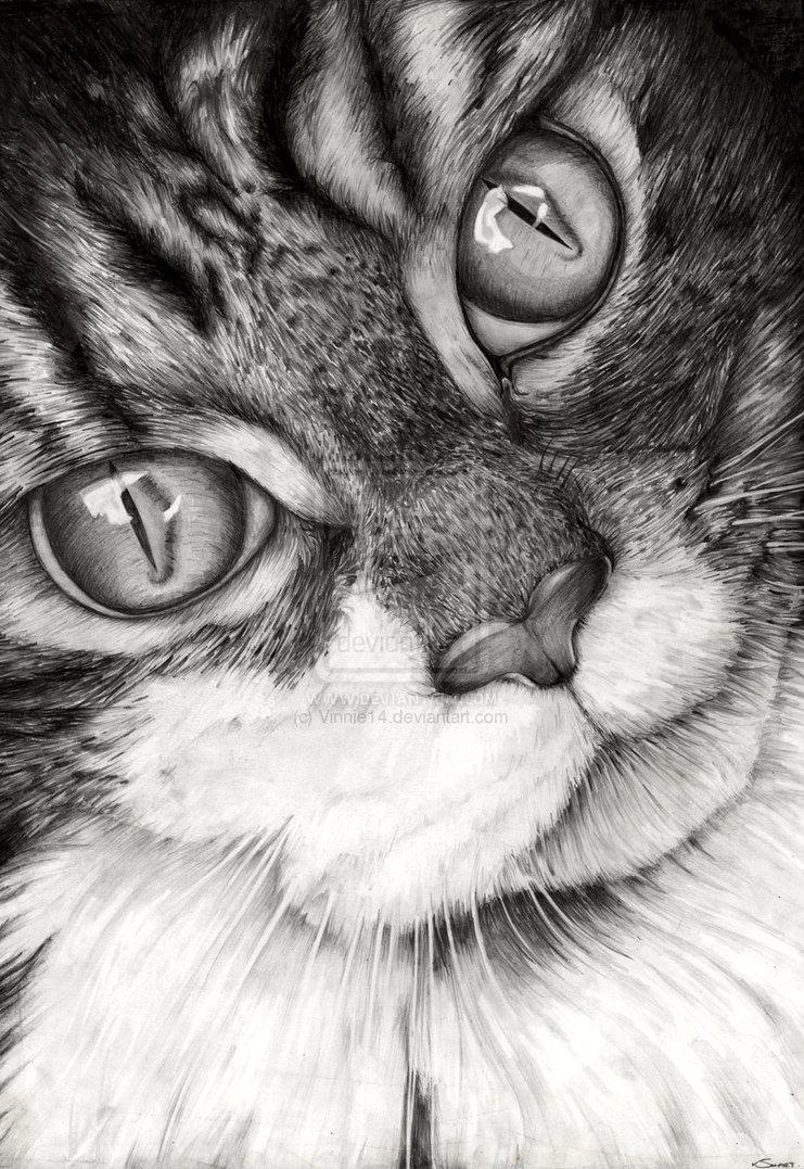 cat drawings by vinnie14 -  11