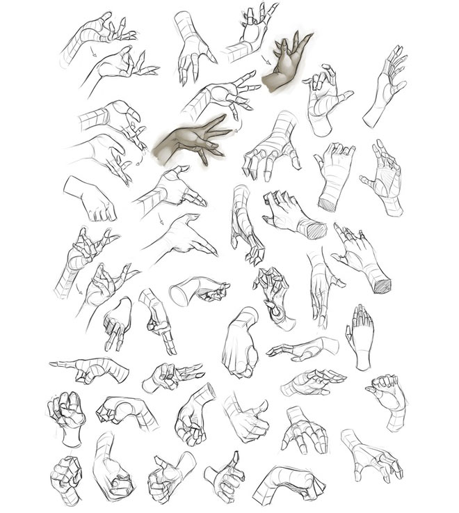 11 hand anatomy drawing