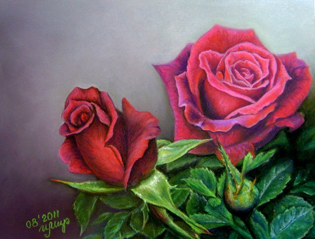 rose flower drawings -  11