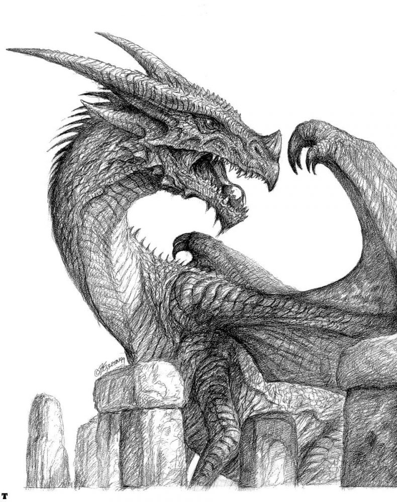 dragon drawings -  12
