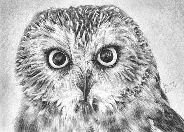 owl bird drawings -  12