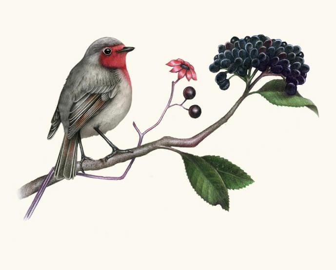 13 bird drawings