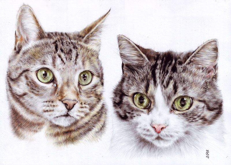 13 cat drawings