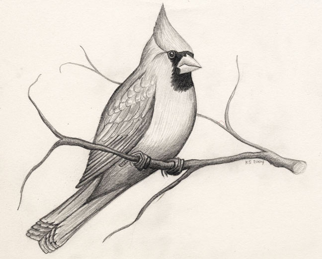 13 pencil bird drawings