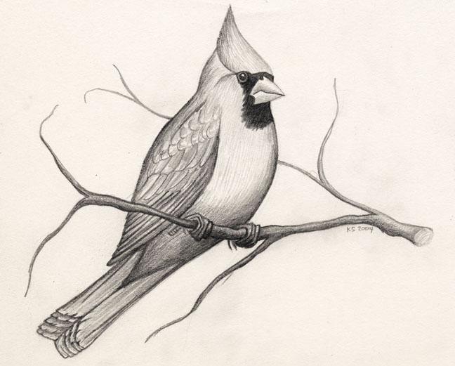 pencil bird drawings -  13