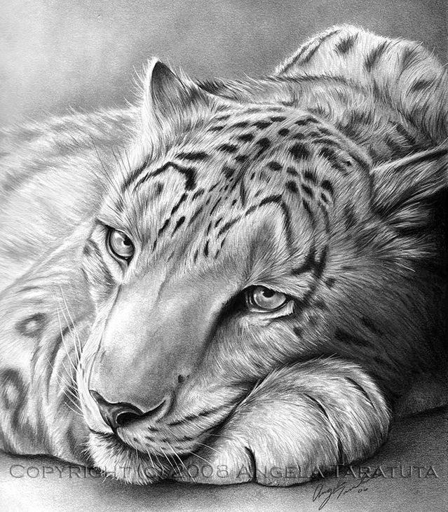 14 animal drawings