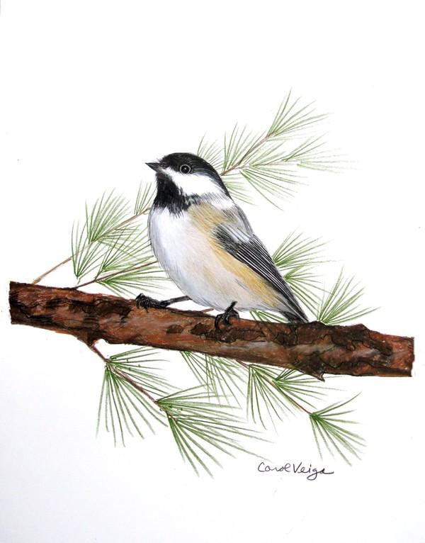 14 bird drawings