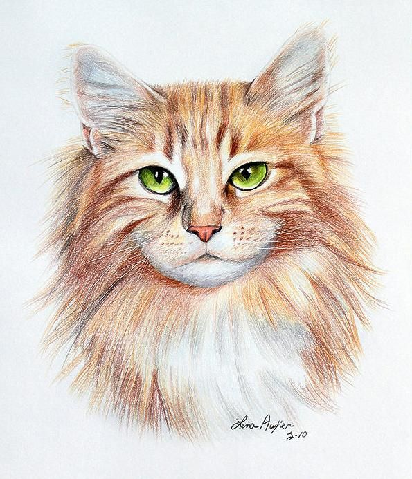 14 cat drawings