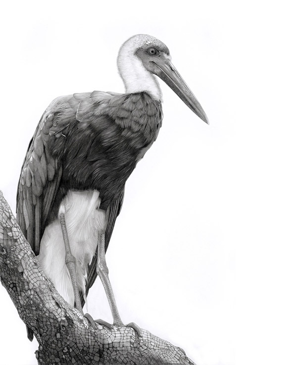 14 stork bird drawings