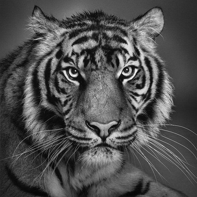 15 animal drawings