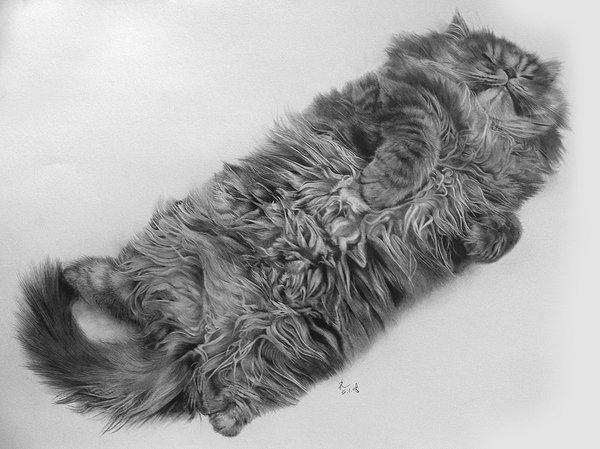 17 cat drawings