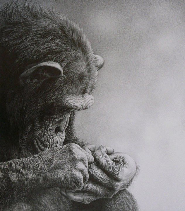 17 gorilla animal drawings