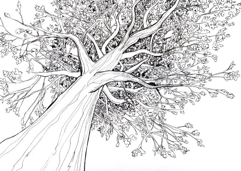 tree drawings -  17