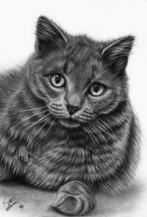 18 cat drawings by titolec87