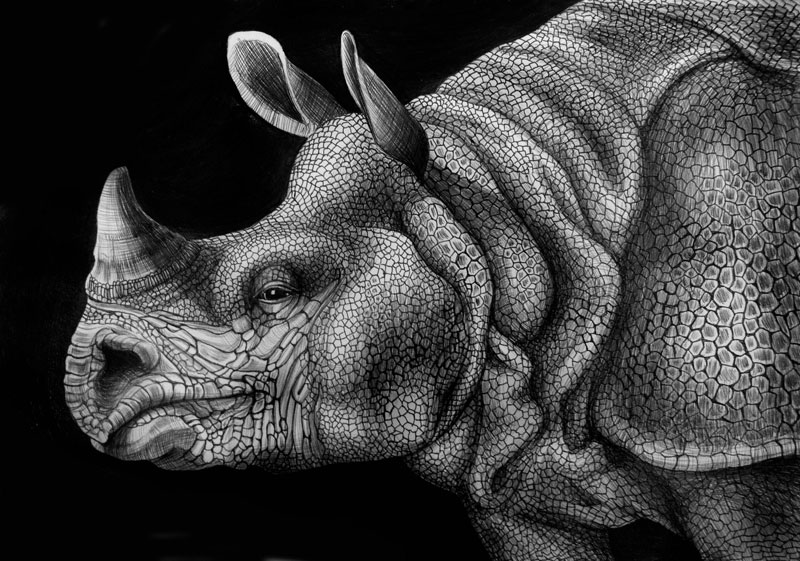19 rhino animal drawings