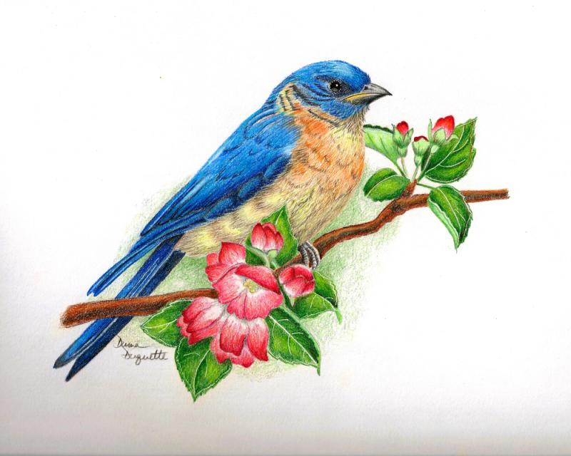 2 blue bird drawings