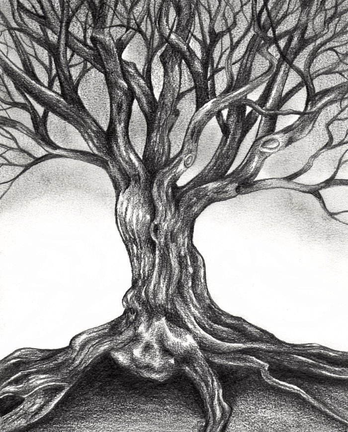 2 tree drawings by gnarly