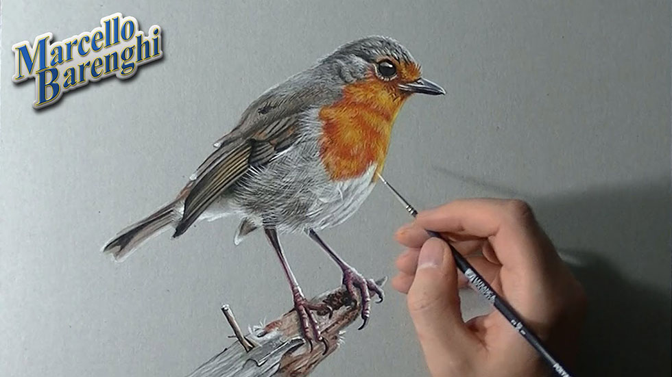 20 bird drawings by marcello barengi