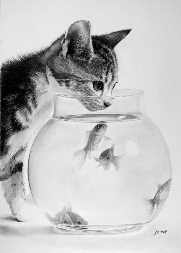 20 cat drawings