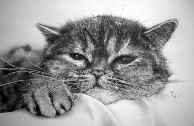 22 cat drawings