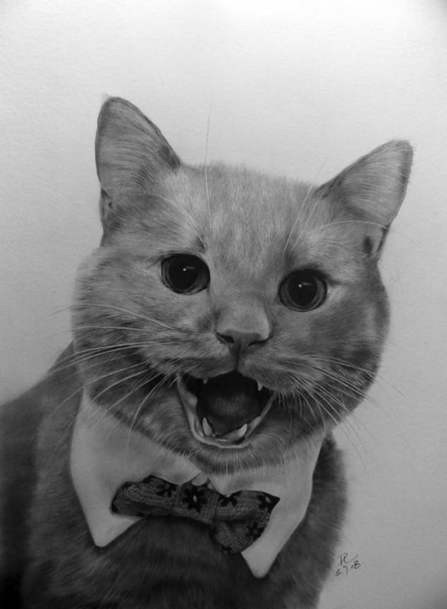 23 cat drawings