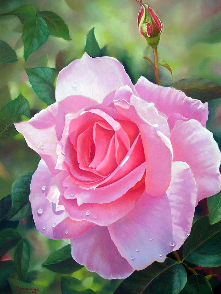 25 rose flower paintings by lynda noel