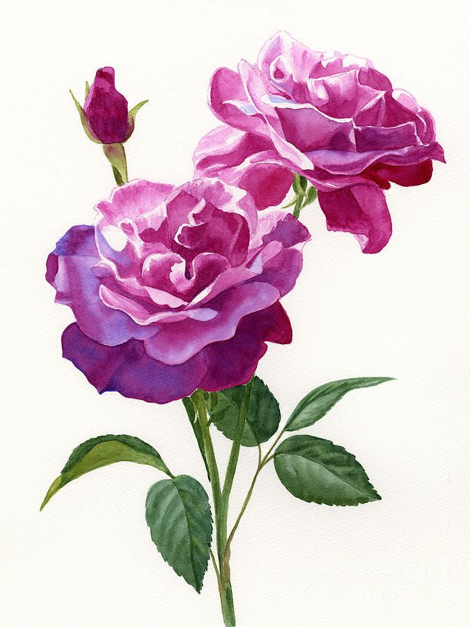 rose flower paintings by sharon freeman -  26