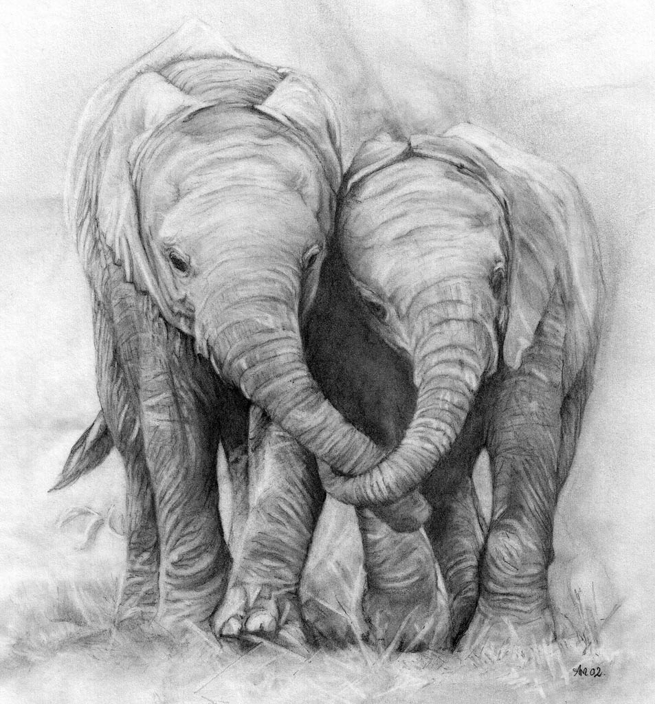 3 animal drawings