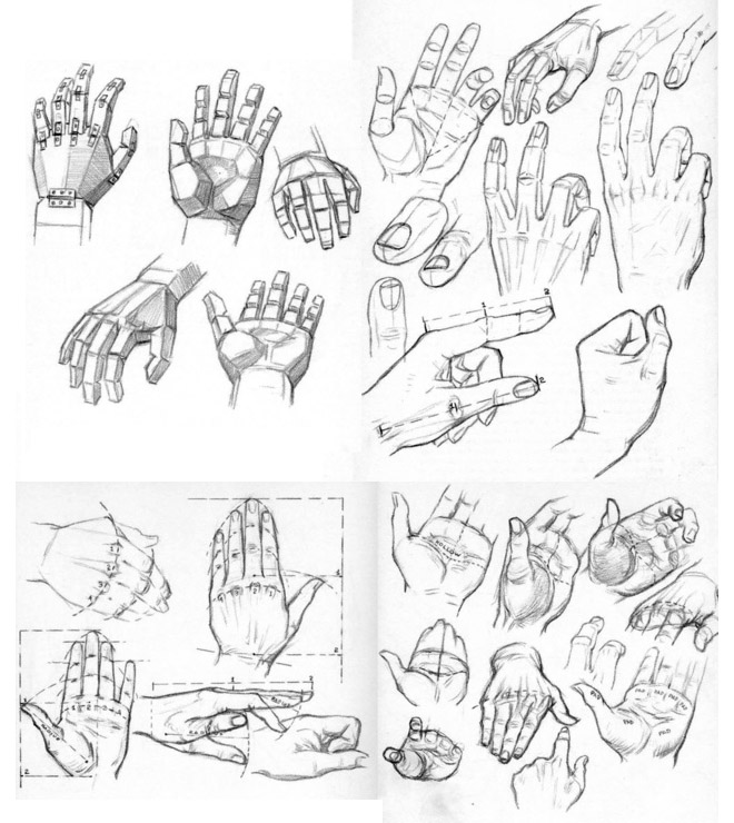 3 hand anatomy drawing