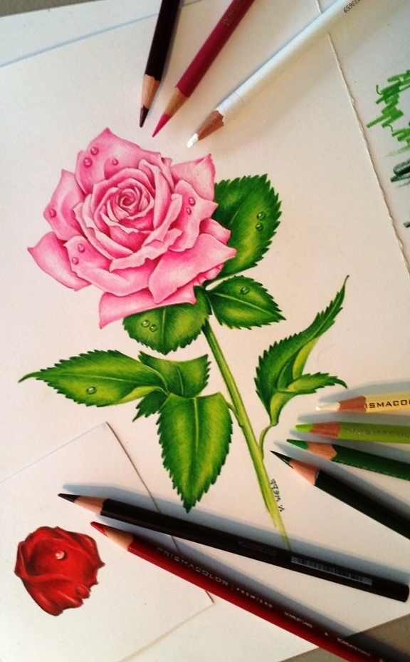 3 rose flower drawings