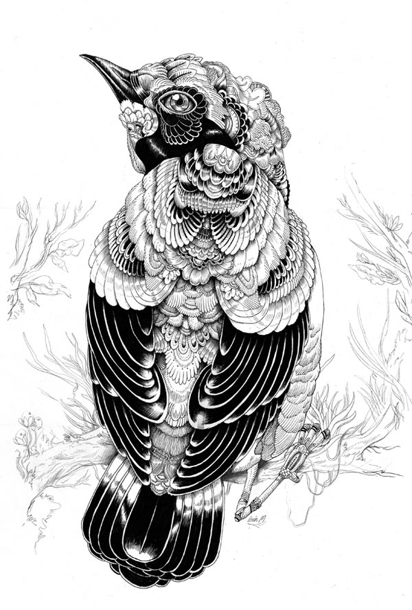 4 bird drawings by iain macarthur